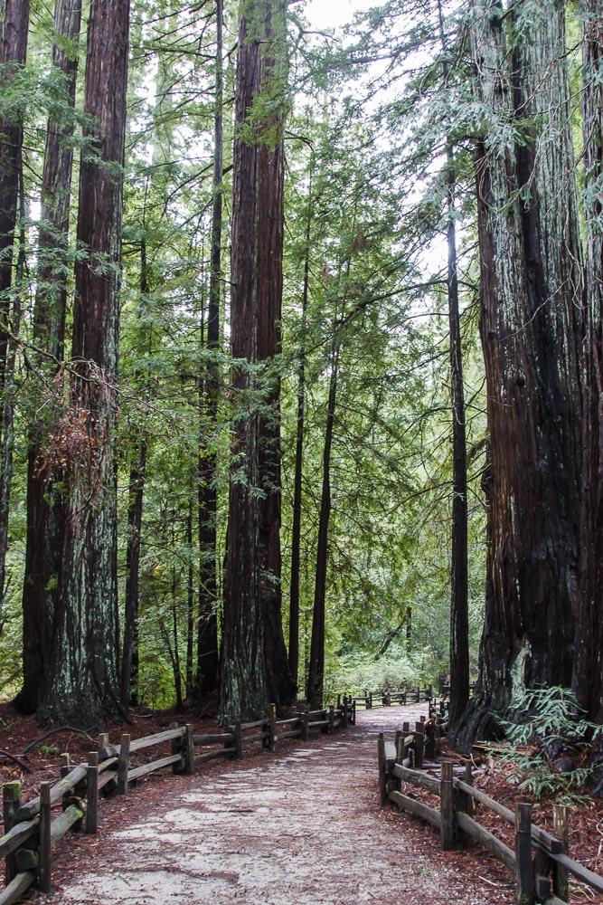 Wanderweg durch die Redwoods im Big Basin Redwoods State Park, einer der Sehenswürdigkeiten in Kalifornien. Bildrechte: Christian Volk