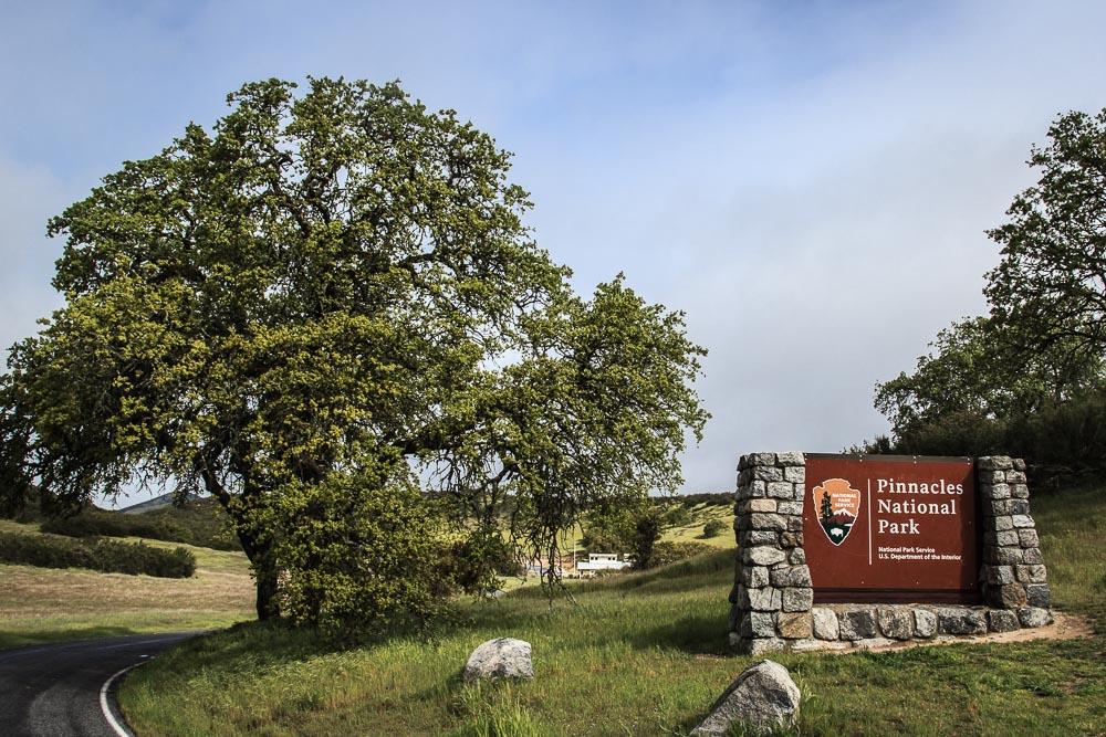 Eingang des Pinnacle National Park mit Schild und Baum