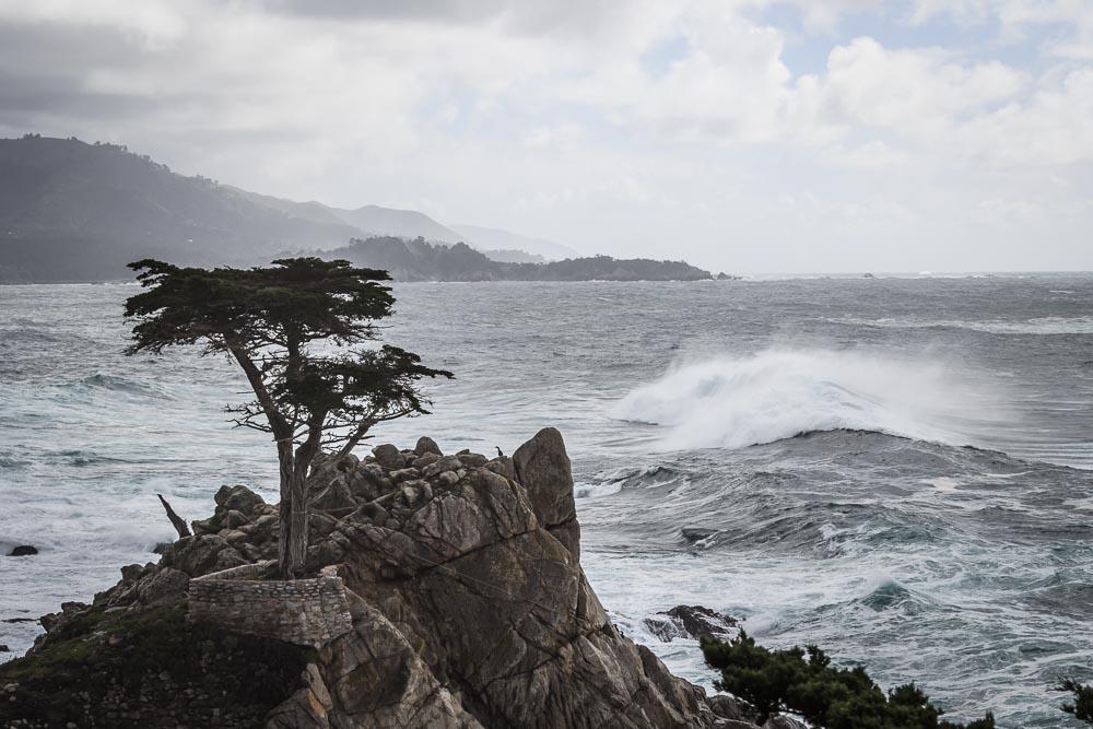 The Lone Cyprus direkt am Pazifik und am 17 Mile Drive.