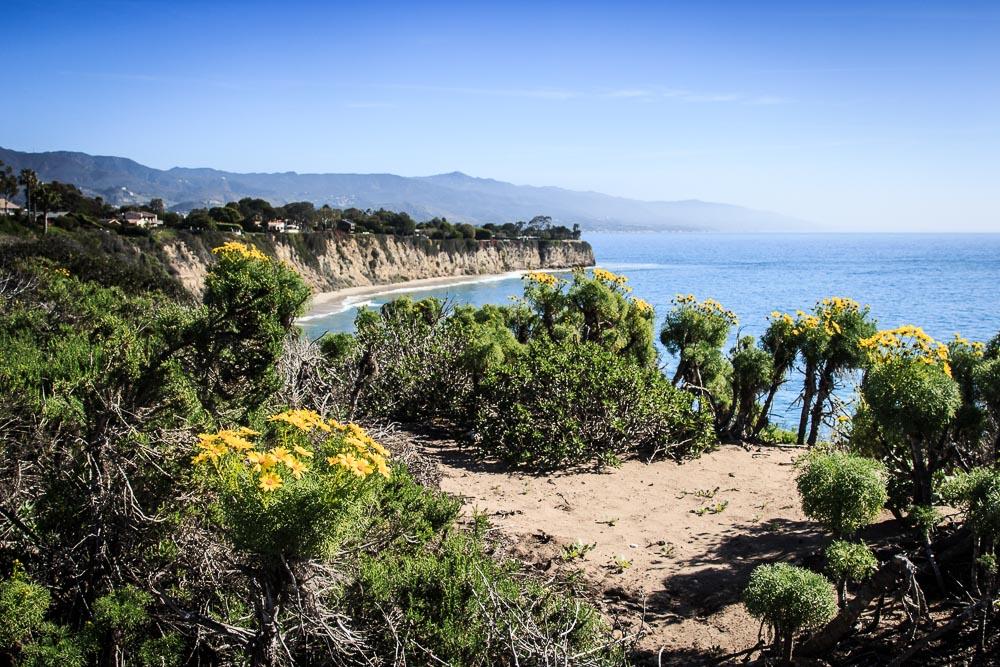 Steilküste Malibus bei blauem Himmel mit Blumen im Vordergrund
