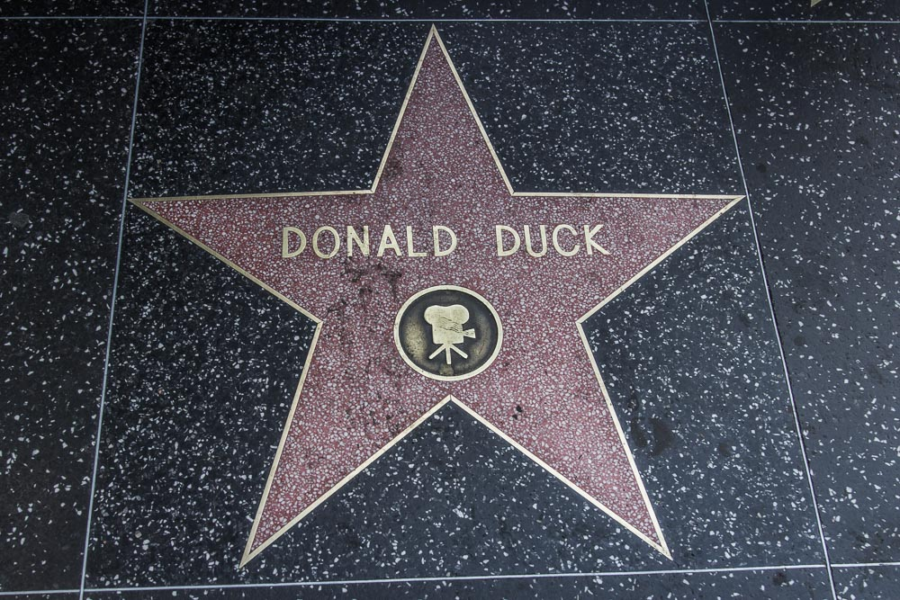 Stern Donald Ducks auf dem Walk of Fame in Hollywood