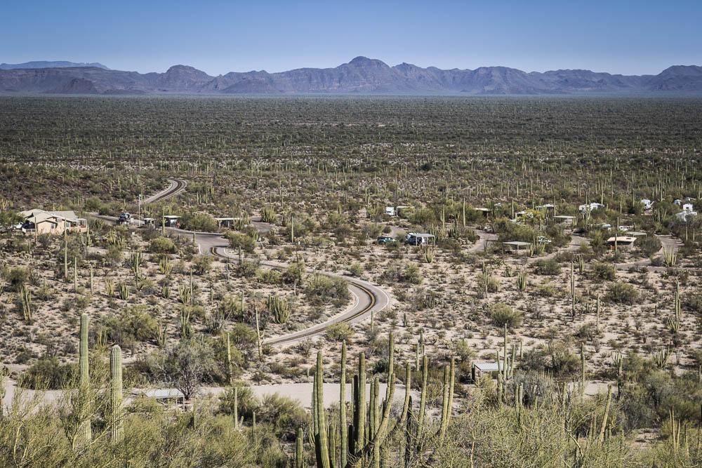 Blick auf das Organ Pipe Cactus National Monument