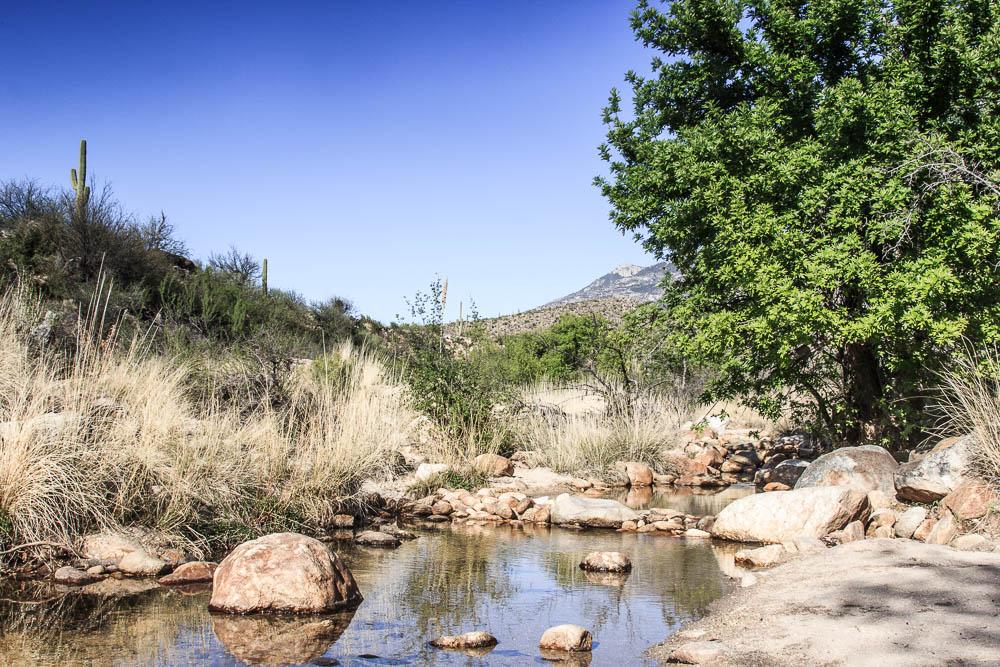 Wasserstelle im Catalina State Park. Einer unserer Top 10 der Sehenswürdigkeiten in Arizona