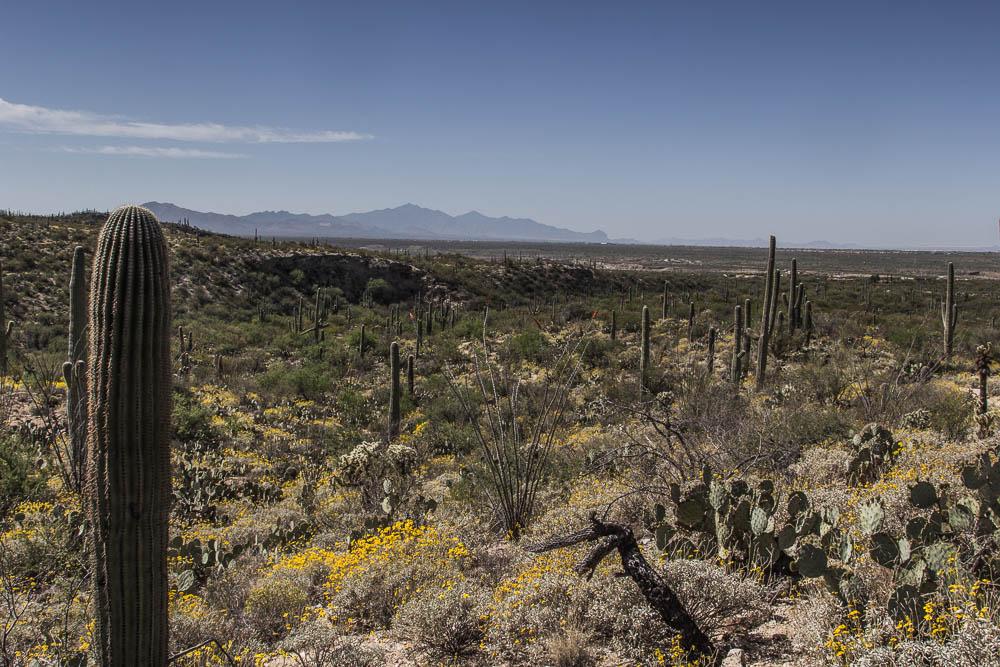 Blick auf den Saguaro National Park