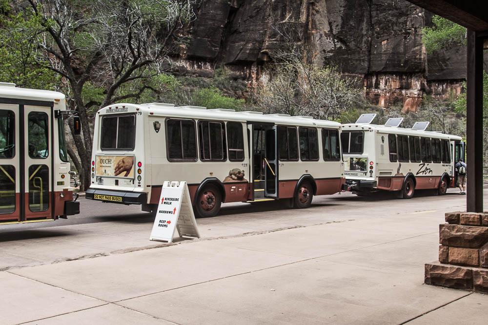 Busse im Zion National Park
