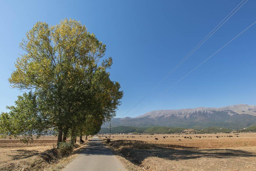 Kleine Nebenstraße im Prespa National Park mit den Viehweiden im Hintergrund.