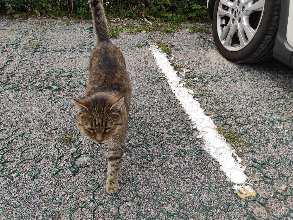 Katze auf dem Parkplart in Schierke.
