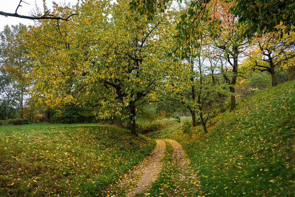 Waldweg im Herbst am Kutschenberg. Gelbes Laub an den Bäumen und auf dem Weg und den Wiesen.