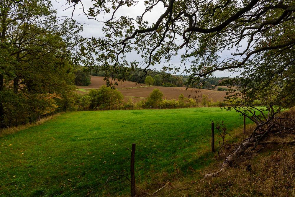 Grüne Wiese am Waldrand nahe des Kutschenberges.