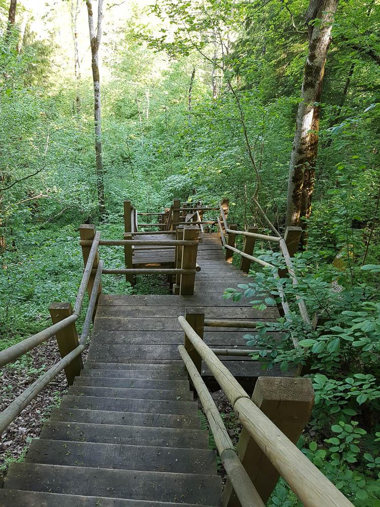 Treppen hinab in den Wald des Sliteres Nationalpark