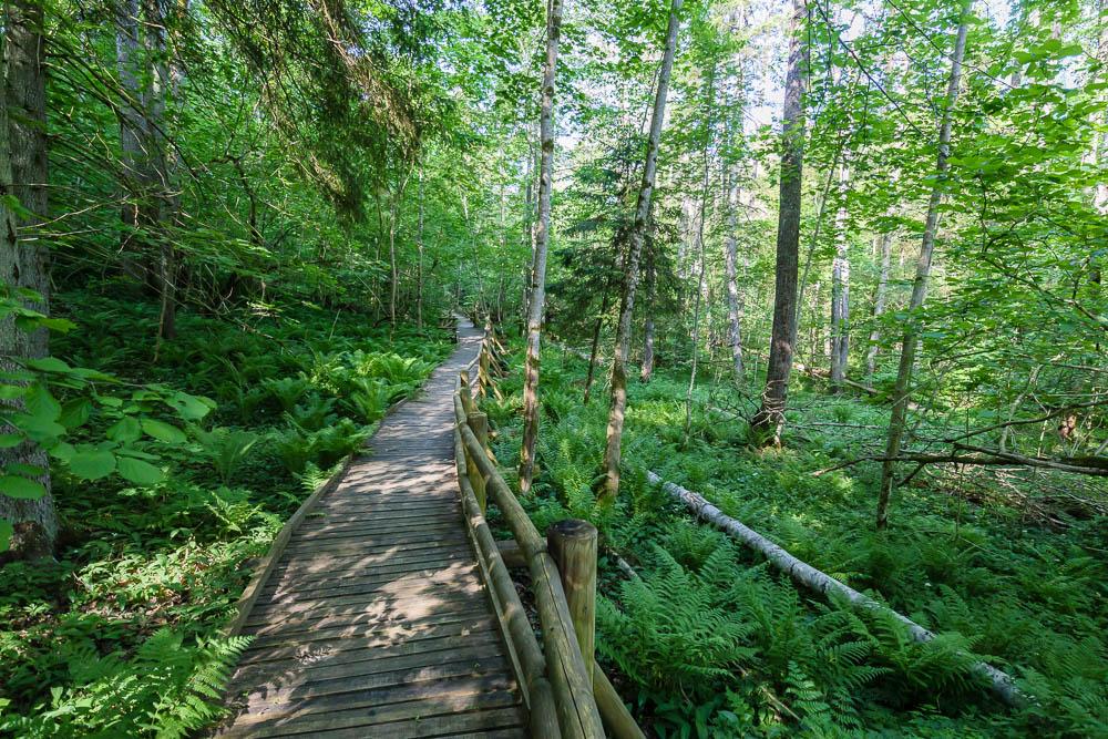 Bretterweg im Sliteres Nationalpark