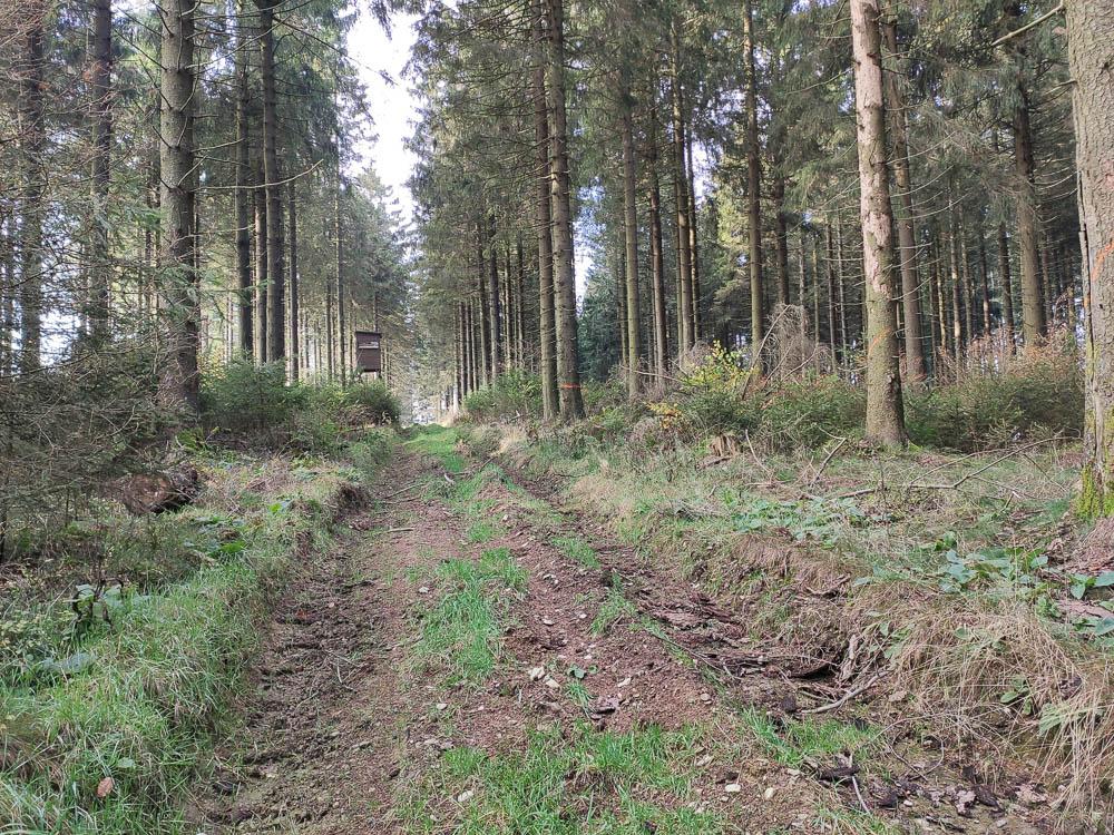 Waldschneise am Langenberg