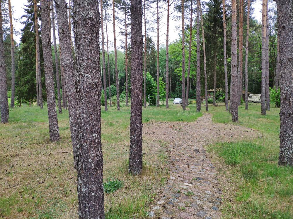 Wald am Campingplatz Harmonie in Litauen