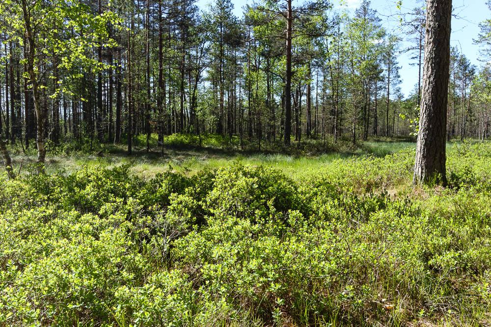 Waldlandschaft im Lahemaa Nationalpark