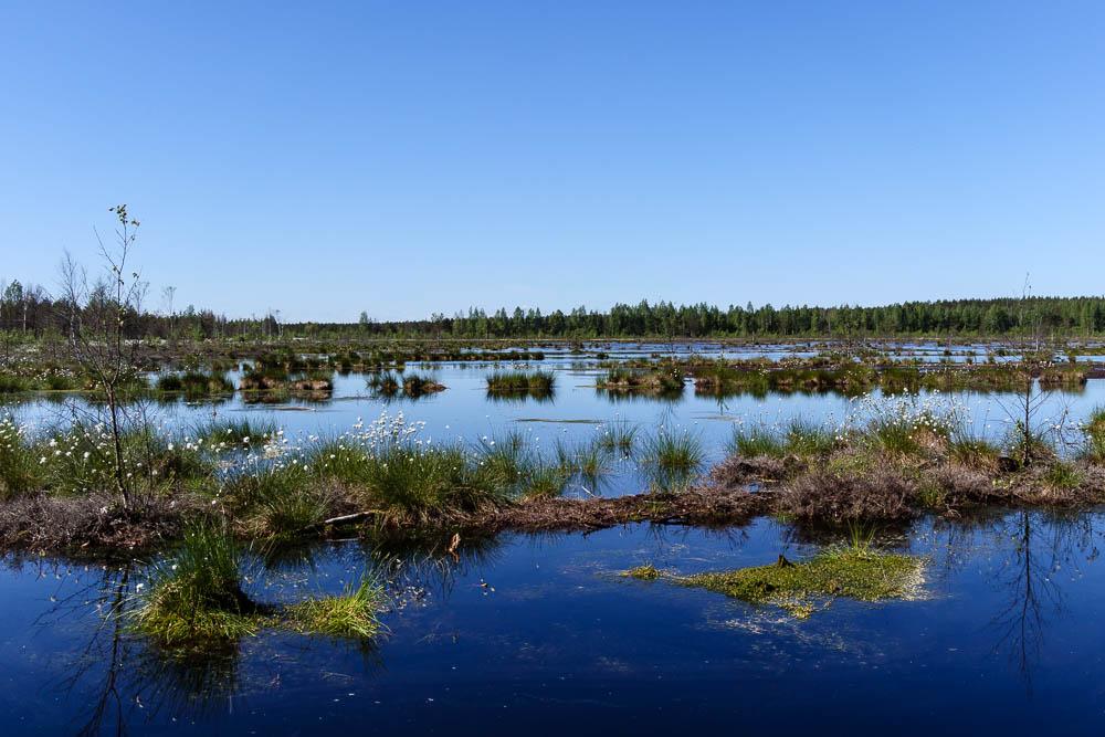 Moor im Laheema Nationalpark