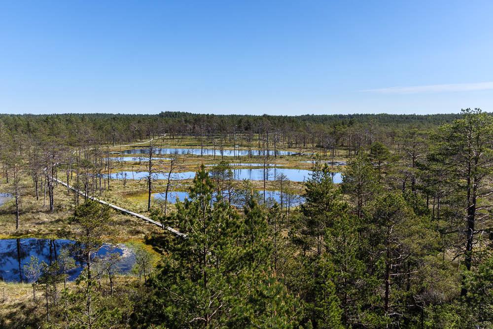 Blick vom Aussichtsturm im Lahemaa National Park, einer unserer Sehenswürdigkeiten in Estland