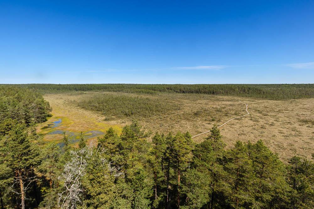 Blick vom Aussichtsturm auf den Bohlenpfad im Lahemaa Nationalpark