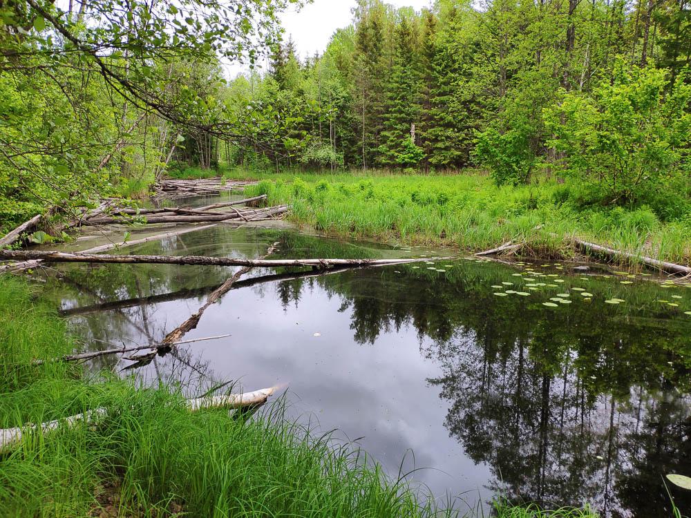Fluss mit Baumstämmen gesehen beim Wandern im Soomaa Nationalpark