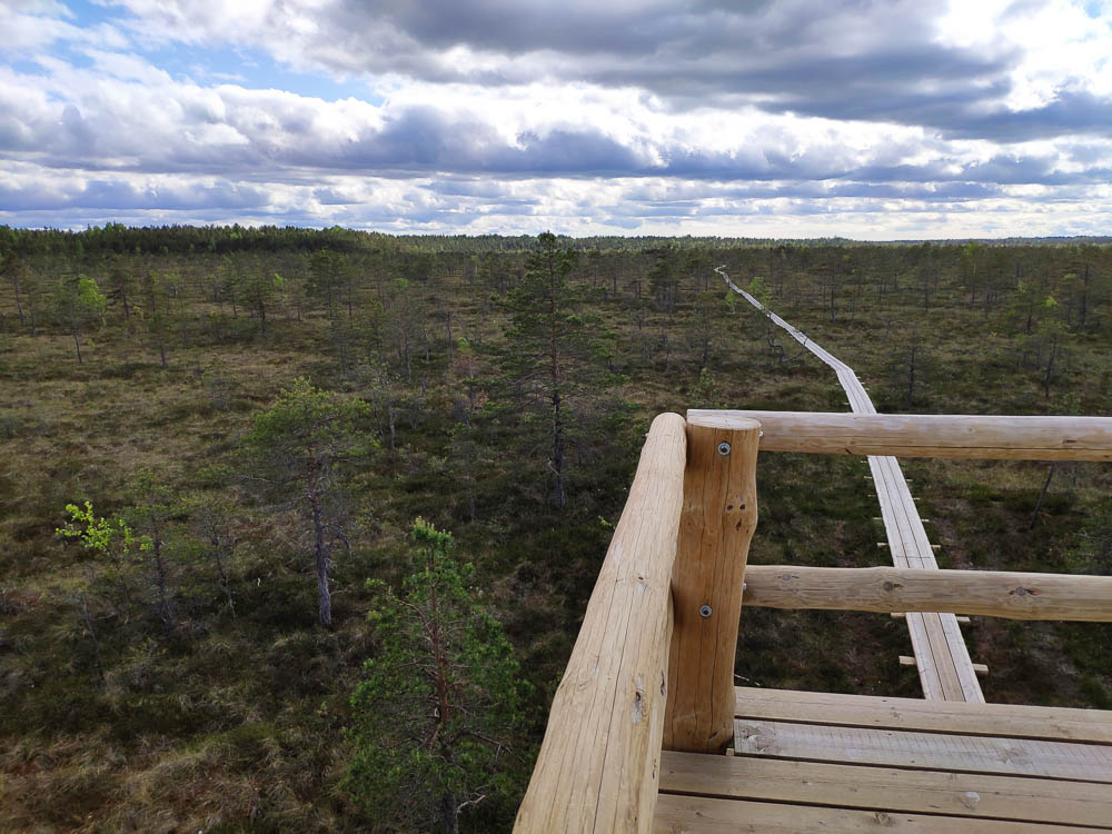 Blick vom Aussichtsturm auf das Moor im Soomaa Nationalpark