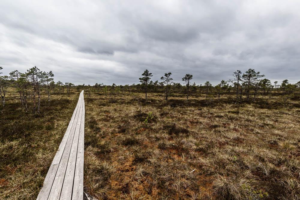 Bohlenweg im Hochmoor beim Wandern im Soomaa Nationalpark