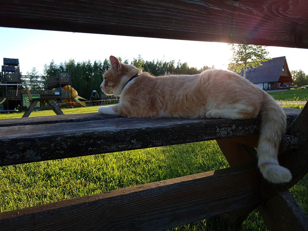 Katze am Camping Apalnkalns