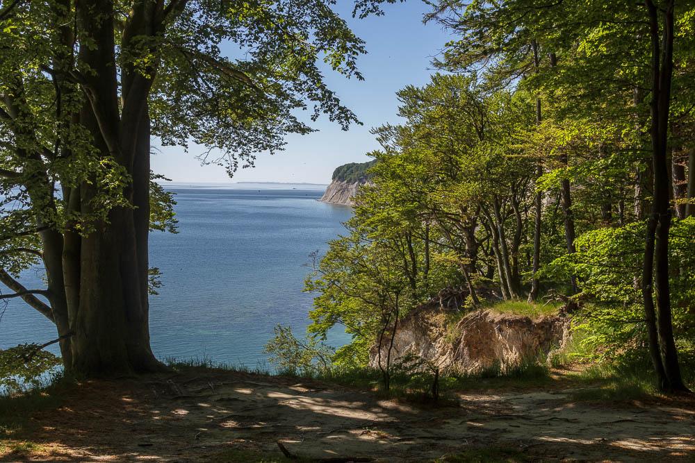 Blick vom Hochuferweg aus beim Wandern im Nationalpark Jasmund in Richtung Ostsee