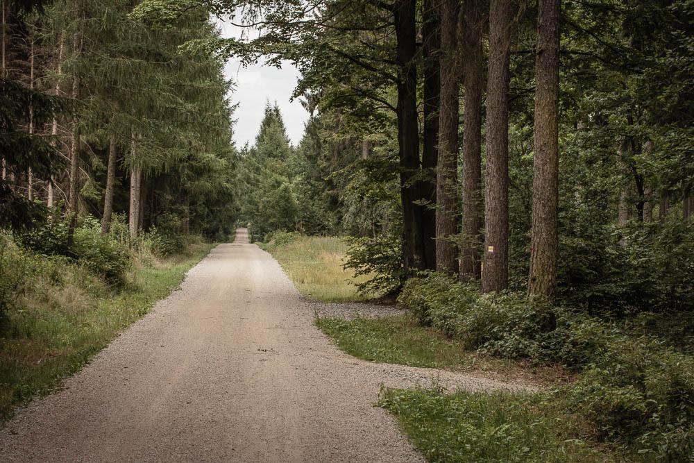 Im Rabensteiner Wald im Osten des Totensteins