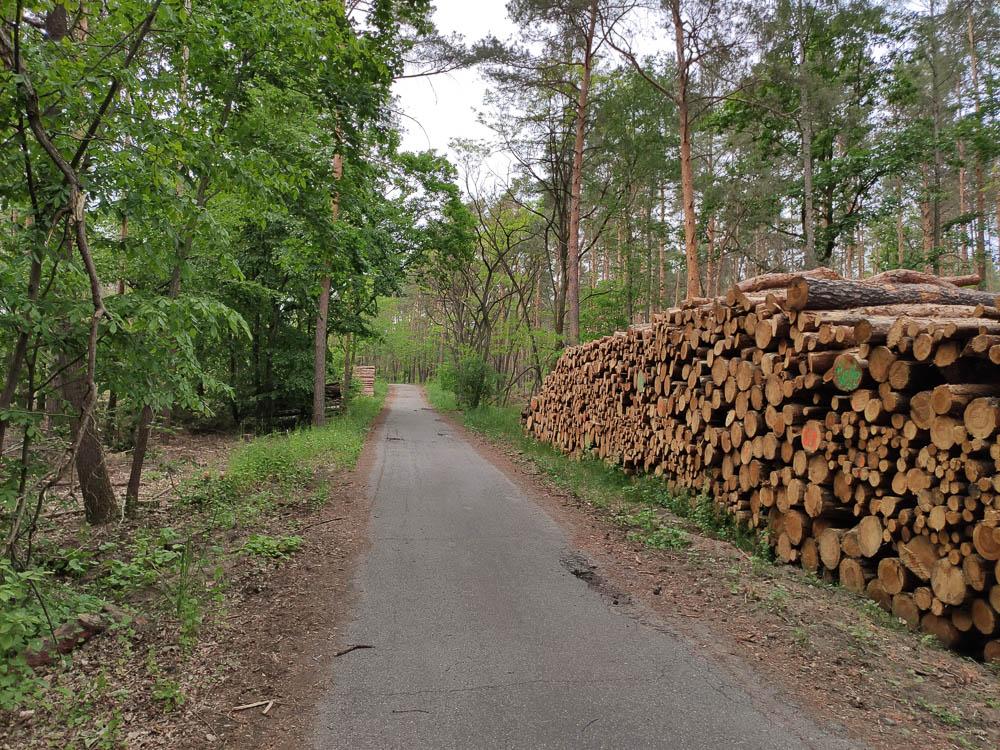 Aspahltierter Weg zum Großen Müggelberg in Berlin. Gestapeltes Holz auf der rechten Seite des Weges.