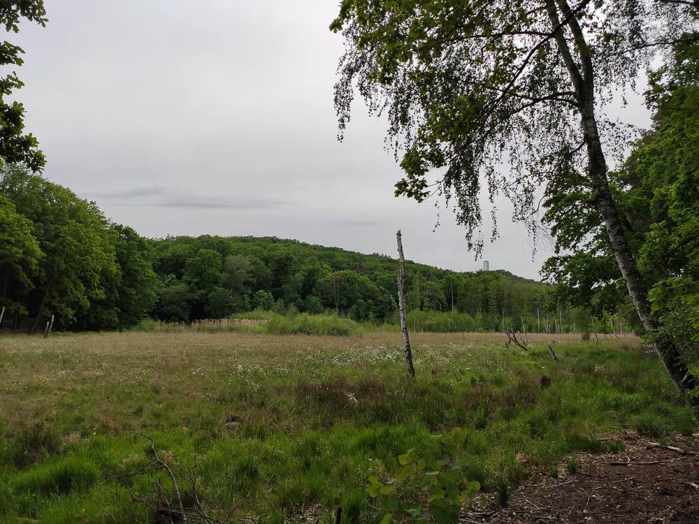 Teufelssee mit Moor im Vordergrund. Im Hintergrund die Müggelberge sowie der Aussichtsturm auf dem Kleinen Müggelberg.
