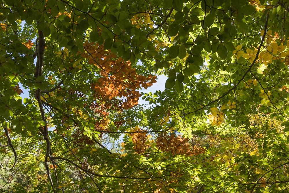 Herbststimmung auch im Nationalpark Paklenica