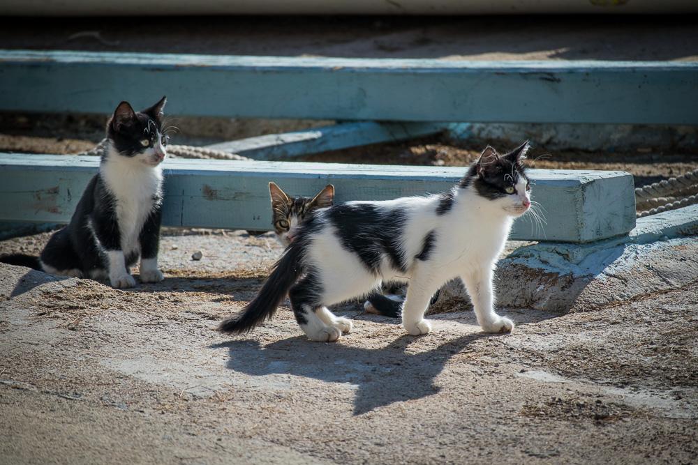 Überall süße Katzen auf der Halbinsel Murter nahe dem Ort Pirovac