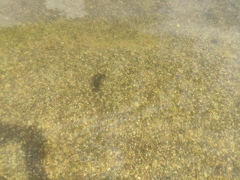 Krebse gibt es auch im Wasser des Teichs im Ökobad Lindenthal