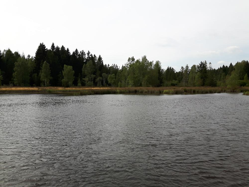 Ein eher abgelegenes Ufer des Greifenbachstauweihers vom Tretboot aus gesehen