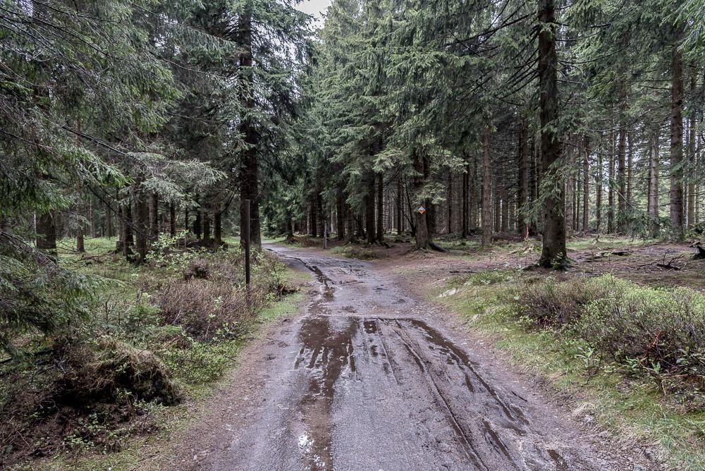 Anfangs waren die Wege zum Großen Beerberg noch recht matschig und nass