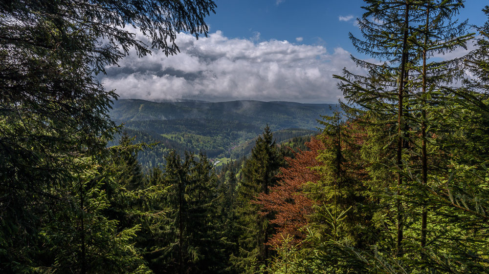 Projekt 16 Summits: Wanderung zum Großen Beerberg, höchster Berg in Thüringen