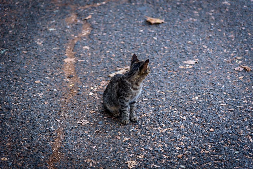 Sie wollte sich einfach nicht fotografieren lassen die Katze, welche wir auf unserem Tagesausflug nach Burgas gesehen haben