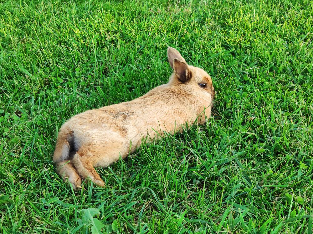 Eines der süßen Kaninchen des Campingplatzes Camping Zanzibara
