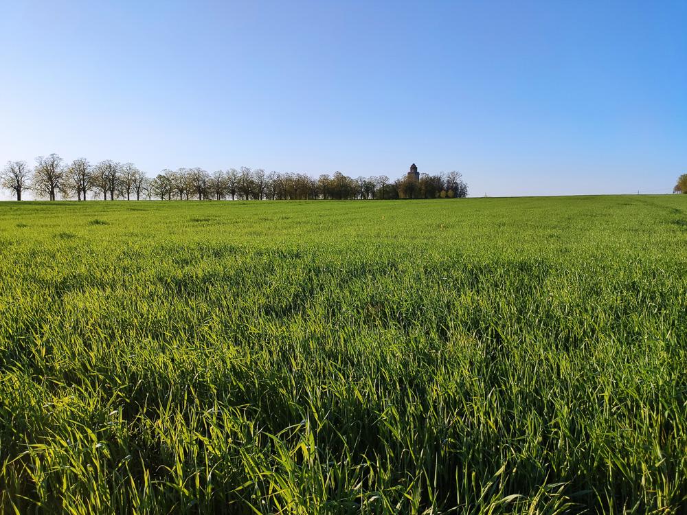 Blick über das Feld auf den Bismarckturm in Leipzig und die Krim-Linden-Allee