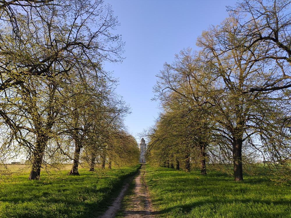 Die Krim-Linden-Allee, welche direkt zum Bismarckturm in Leipzig führt