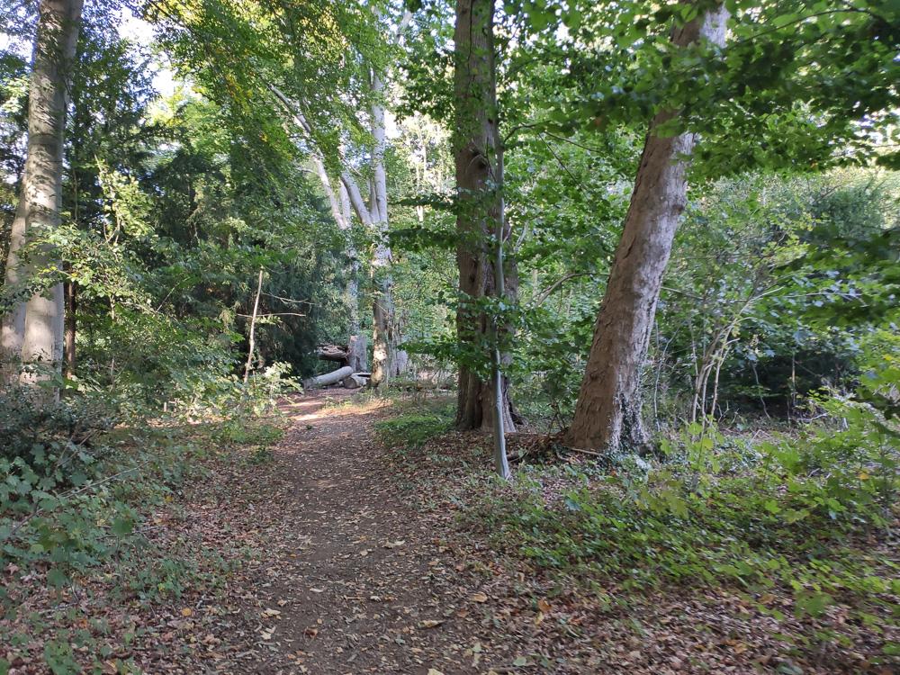 Erster Eindruck der Wege im Friedehorstpark