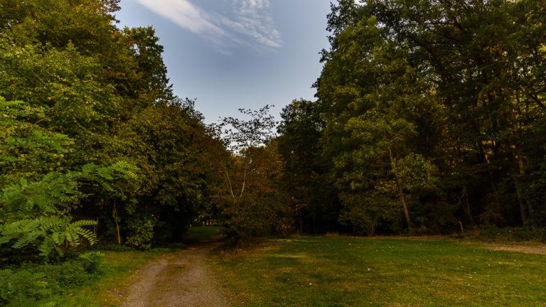 Zeltwiesen entlang des Weges zum Ohmbachsee im Campingpark Ohmbachsee