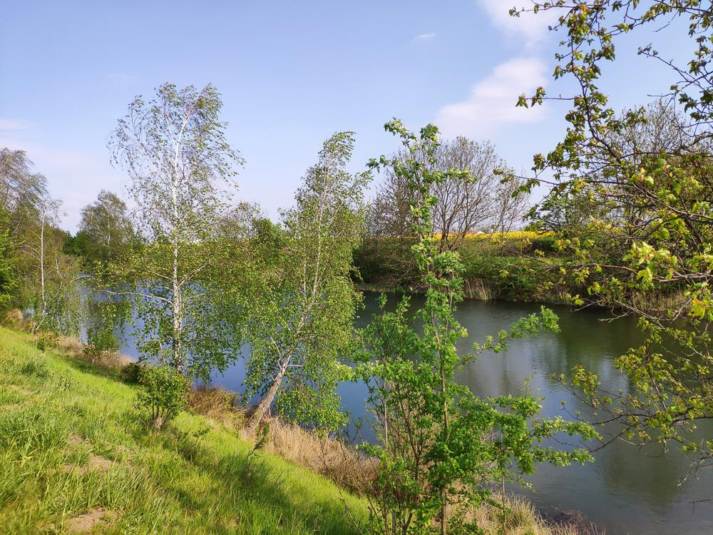 Bewachsenes Ufer des Elster-Saale-Kanal