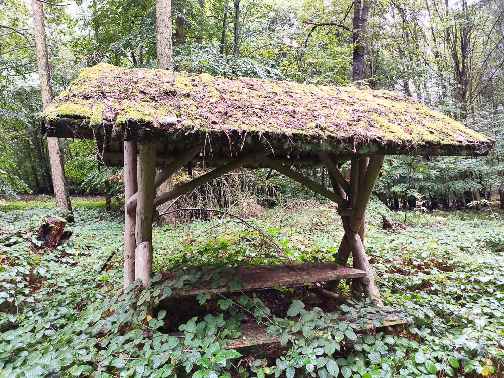 Überwucherte Picknickbank am Helpter Berg, höchster Berg in Mecklenburg-Vorpommern