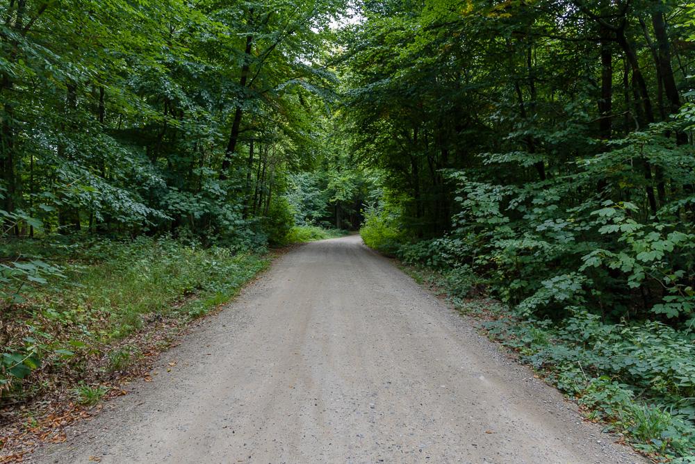 Forstweg durch dichten Wald zum Bungsberg und dem Erlebniszentrum