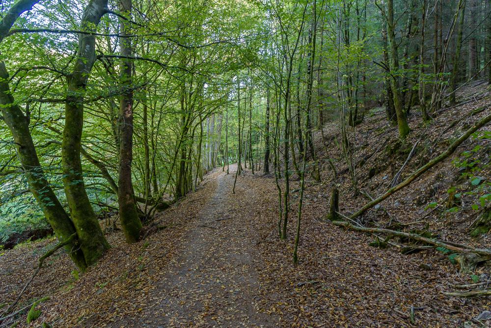 Nach dem Züscher Hammer führt uns die Dollbergschleife durch den Wald hin zur Talsperre Nonnweiler
