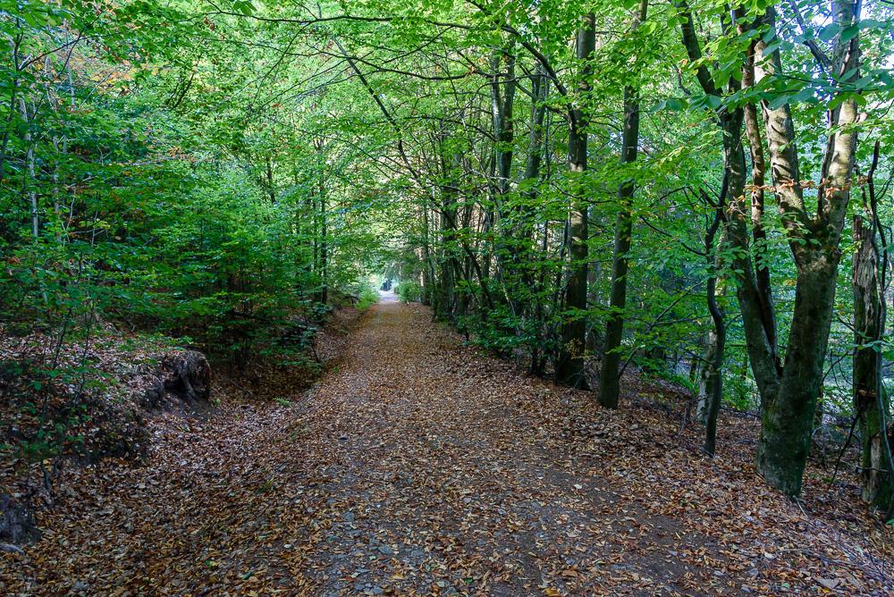 Durch den Wald geht es sachte bergab zur Landstraße