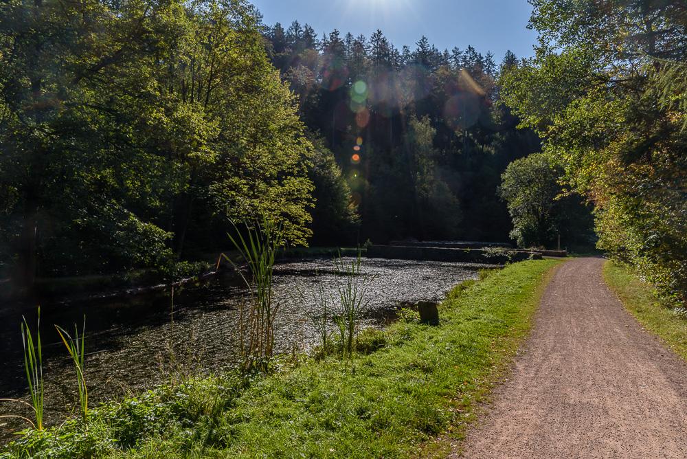 Der Teich am Züscher Hammer im Sonnenschein als Teil der Dollbergschleife