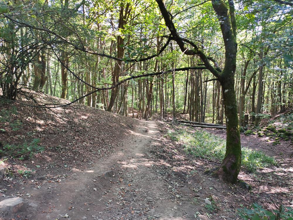Bergab ging es durch den Wald zum Guckaisee