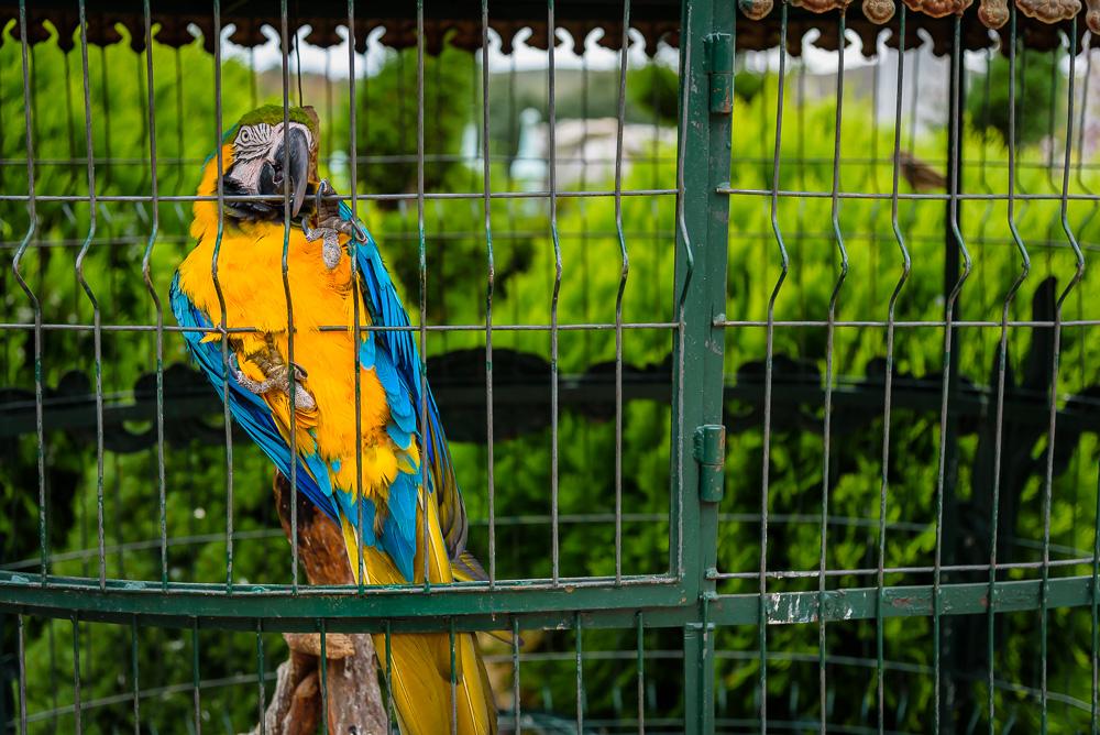 Bunter Papagei im Garten der Burg von Ravadinovo