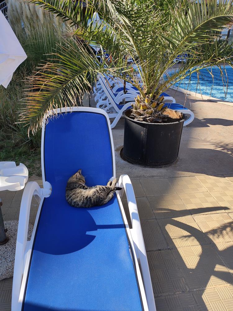 Katze auf der Liege des Hotel Sol Luna Bay